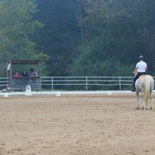 Photos from the G&H Equestrian Show